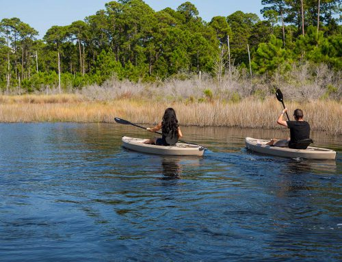 Hidden Adventures Near Navarre Beach